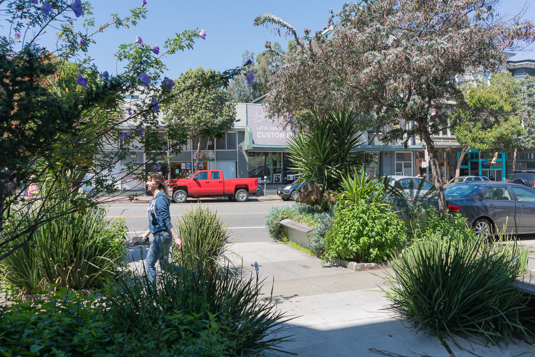 IMAGE: https://tjb.smugmug.com/Urban/i-xtbDXXJ/0/O/Urban-nature-3.jpg